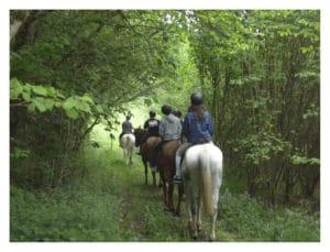 asturias caballo 1
