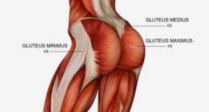 ejercicios de fuerza para el gluteo mayor