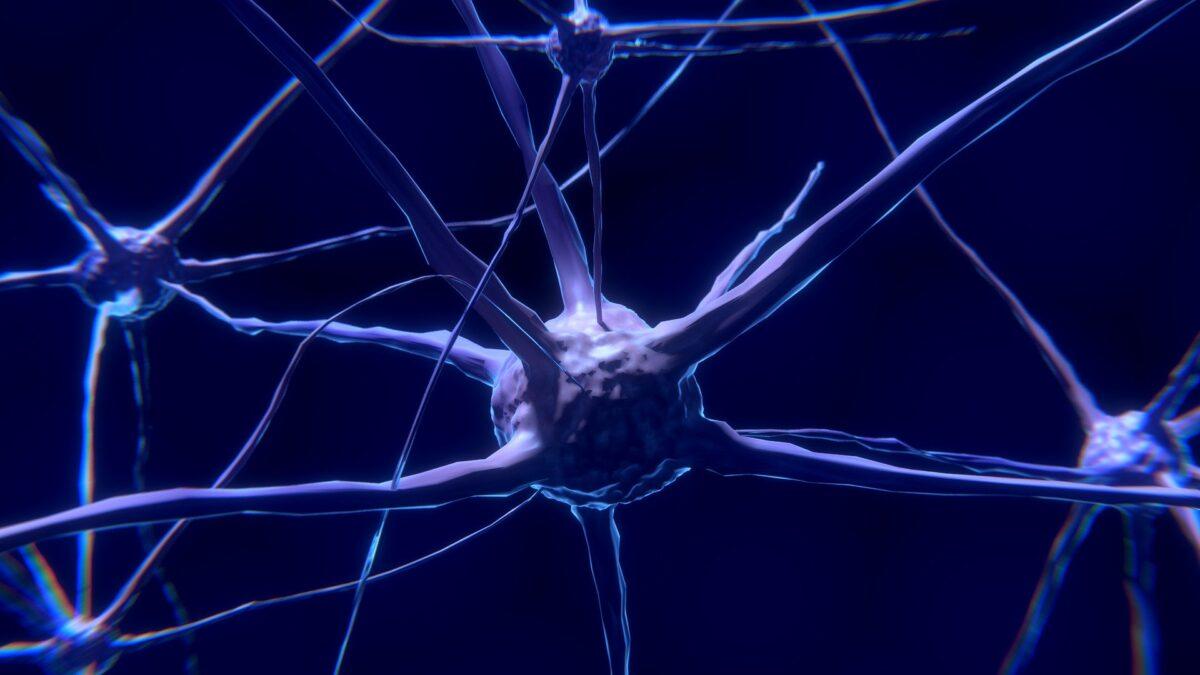Los beneficios de la actividad física para el cerebro